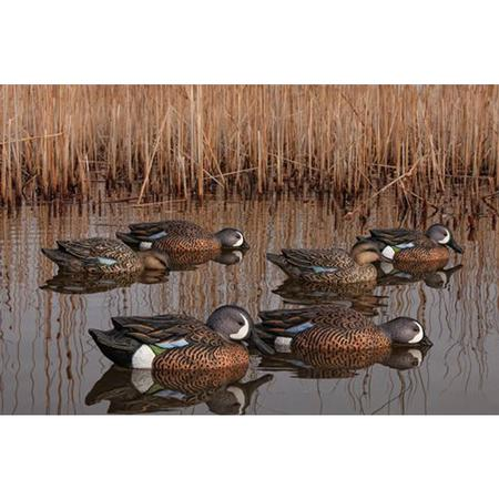 AVIAN-X TOP FLIGHT TEAL