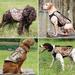 MOMARSH VERSA DOG VEST